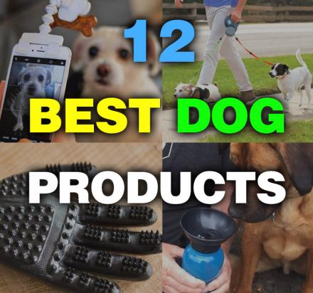 12 Best Dog Products To Make Life Easier With Your Pooch In 2017