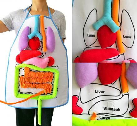 Anatomy Kids Apron Educates Children On Body Organs