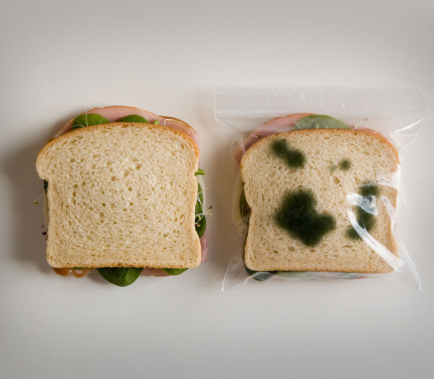 Anti-Theft Moldy Lunch Bags