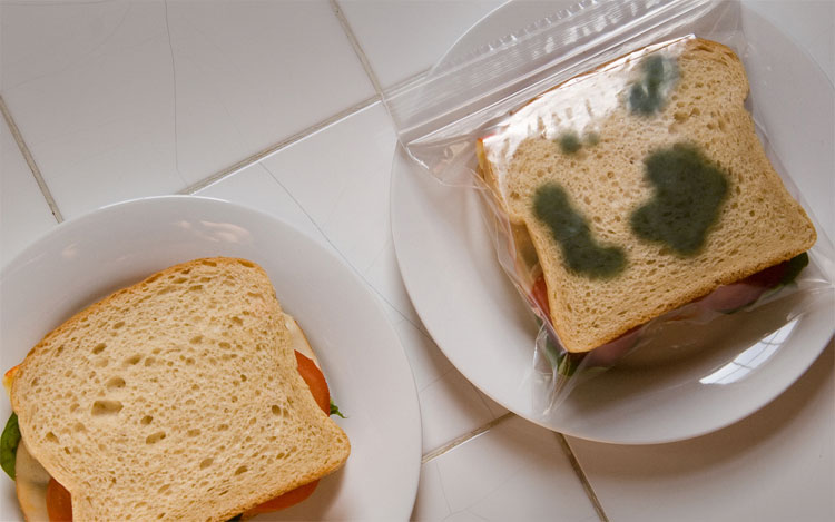 Anti-Theft Lunch Bags - Fake prank Moldy ziploc sandwich bags