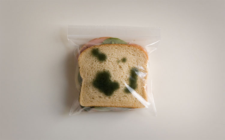 Anti-Theft Moldy Lunch Bags 3
