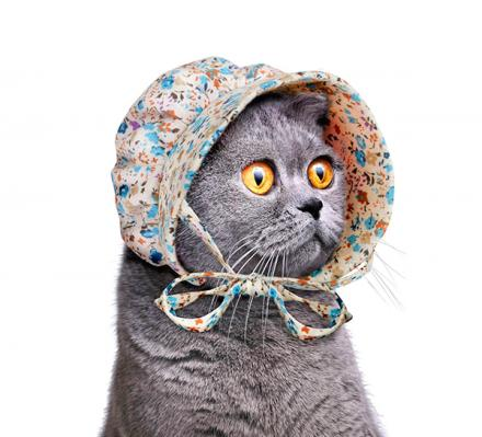 Cat Bonnet Cat Hat