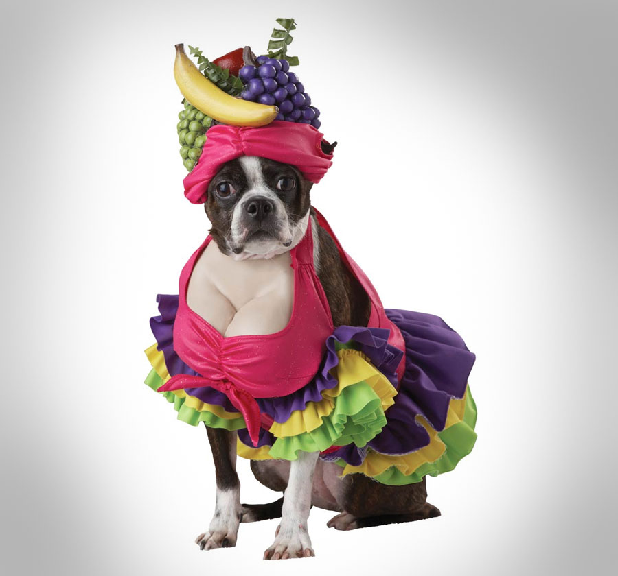 Make your dog pay the ultimate punishment for pooping on the carpet last week by making him dress up in the Cha Cha Cha dog costume this halloween. & Cha Cha Cha Dog Costume