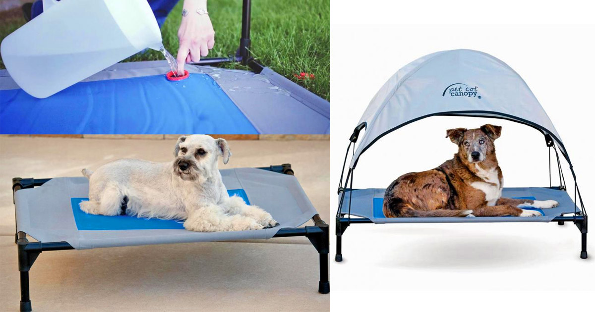 This Outdoor Dog Bed Stores Cold Water To Keep Your Pooch Cool In The Heat