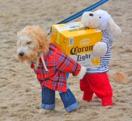 Dog Costume Carrying A Box Of Beer