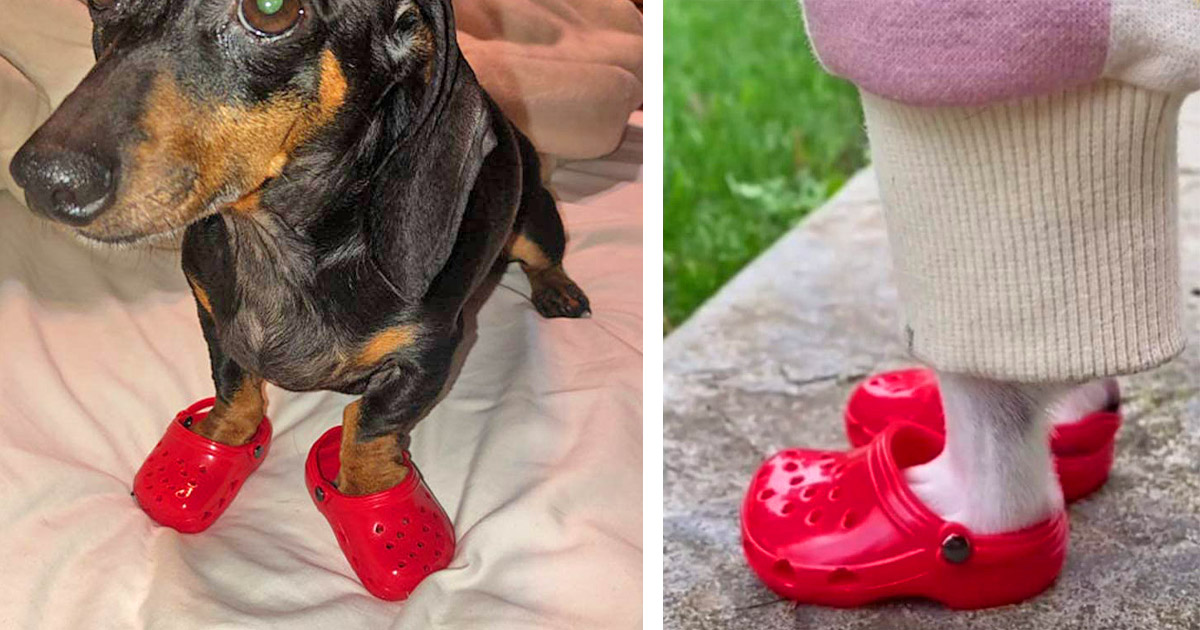 Dog Crocs Are Now A Thing, And Your Dog Probably Wants Them