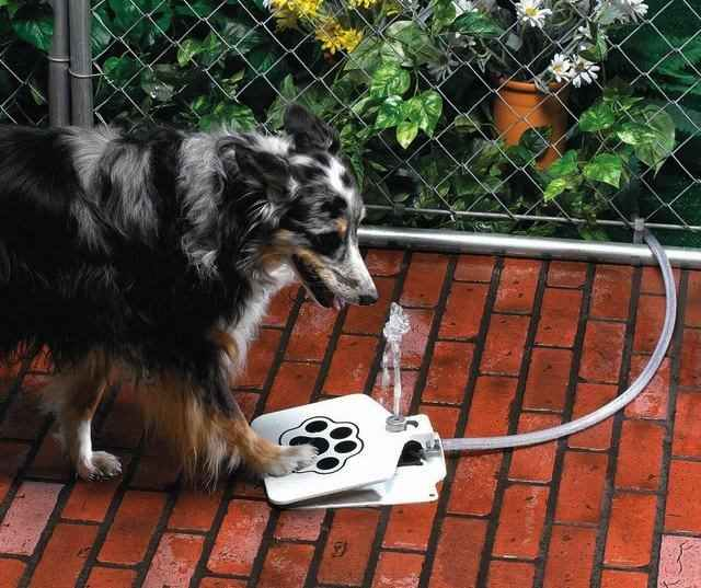 The Doggie Fountain Is An Outdoor Pedal That Sprays Up A Water Whenever It Gets Stepped On And Provides Fresh Drinking For Your Dog Or Pet