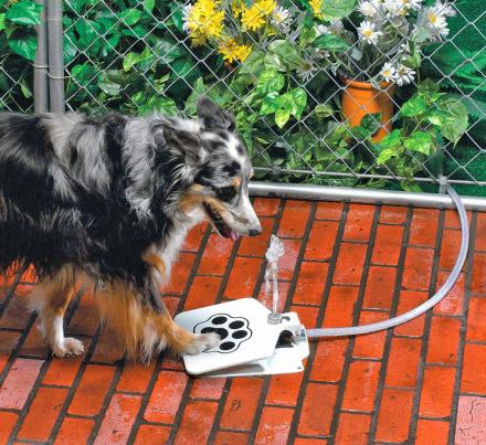 Dog Push Pedal Water Fountain - Doggie Fountain