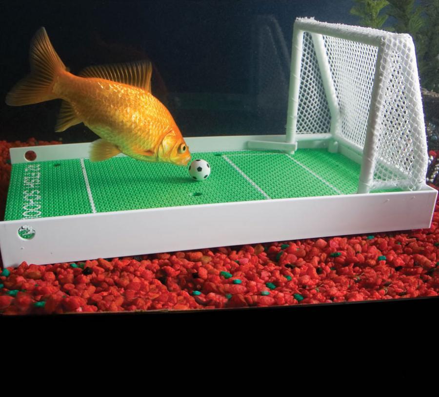 Best Pet Fish