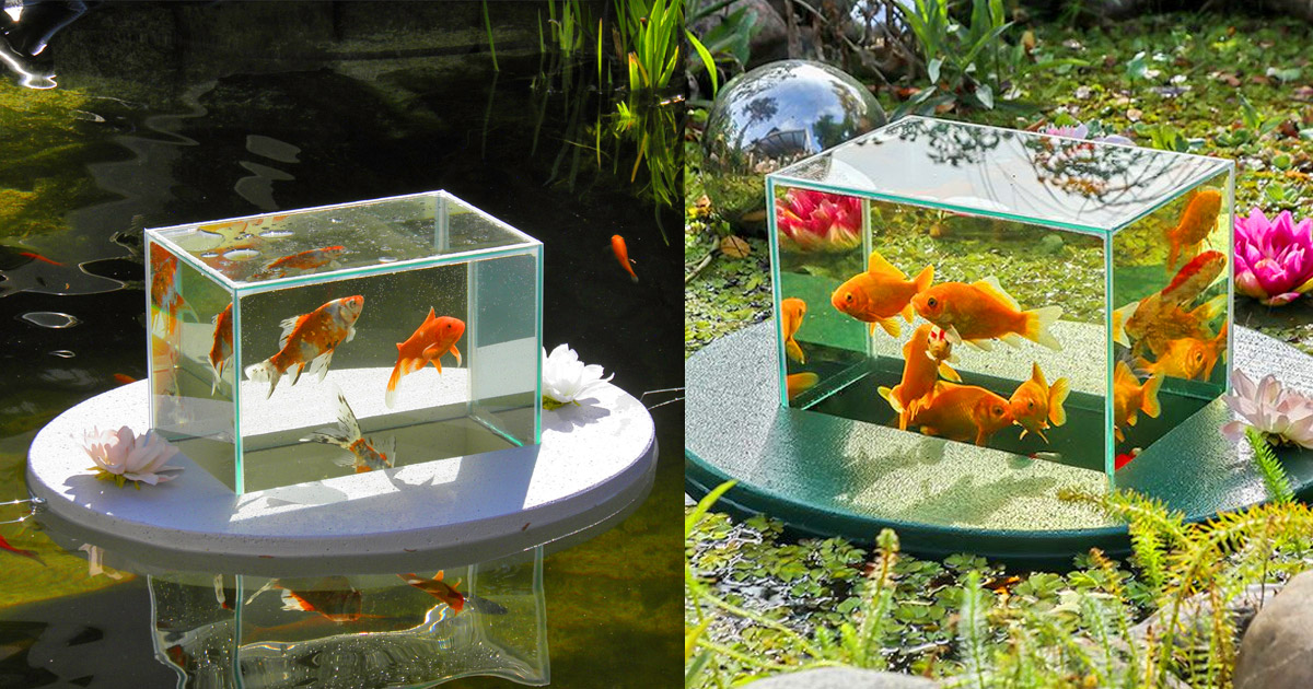 Floating fish observatory lets you view your fish above for Koi pond you can swim in