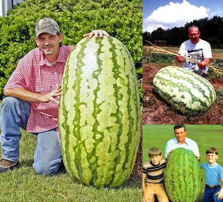 Giant Watermelon Seeds (10-Pack)