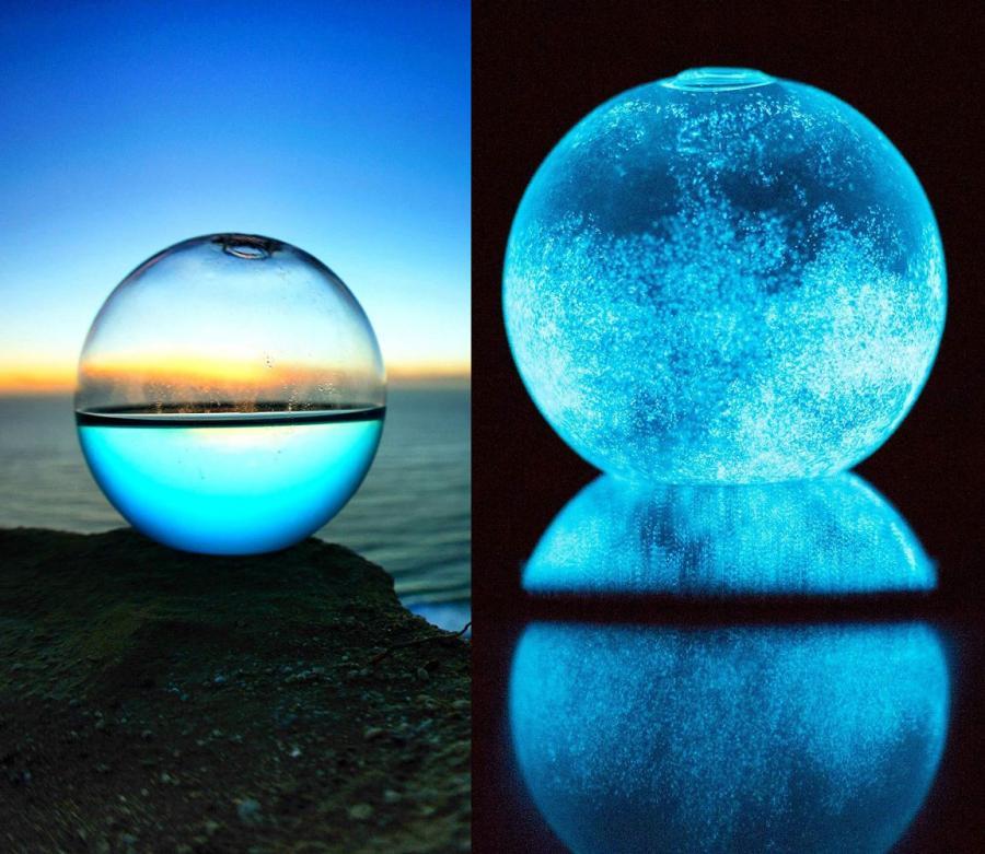 glowing bioluminescent marine plankton aquarium