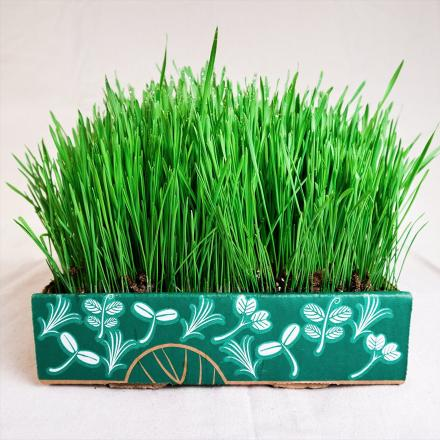 Grow Your Own Microgreens With This Home Gardening Kit