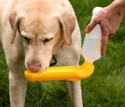Gulpy: A Travel Dog Water Bottle With a Retractable Bowl