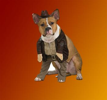 & Indiana Jones Dog Costume