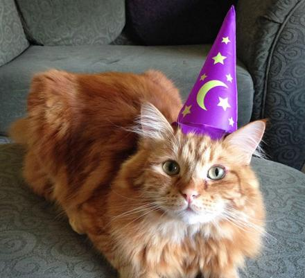 This Inflatable Wizard Hat For Your Cat Should Demoralize Them Enough To Love You