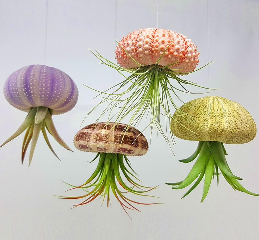 Jellyfish Air Plant Holders 4 Pack