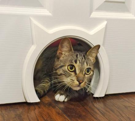 The Kitty Pass: A Kitty Shaped Cat Door Pass