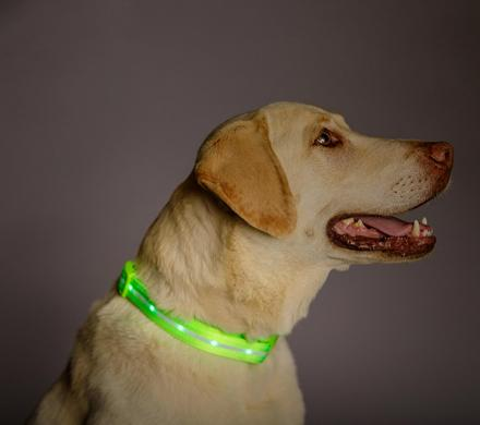 LED Lighted Dog Collar Helps Your Pooch Be Seen At Night