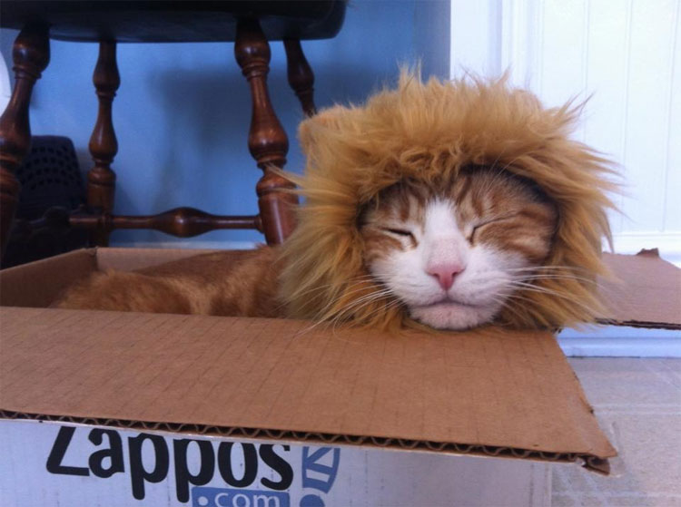 Lion S Mane Cat Hat