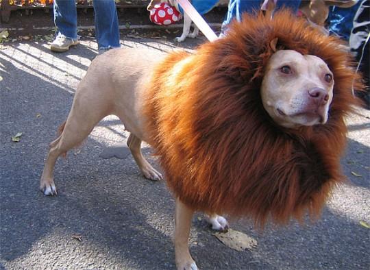 Dog Lion Mane ... & Dog Lion Mane Costume