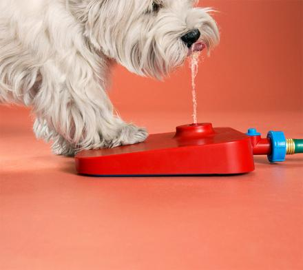 Pawcet: A Drinking Fountain For Your Dog