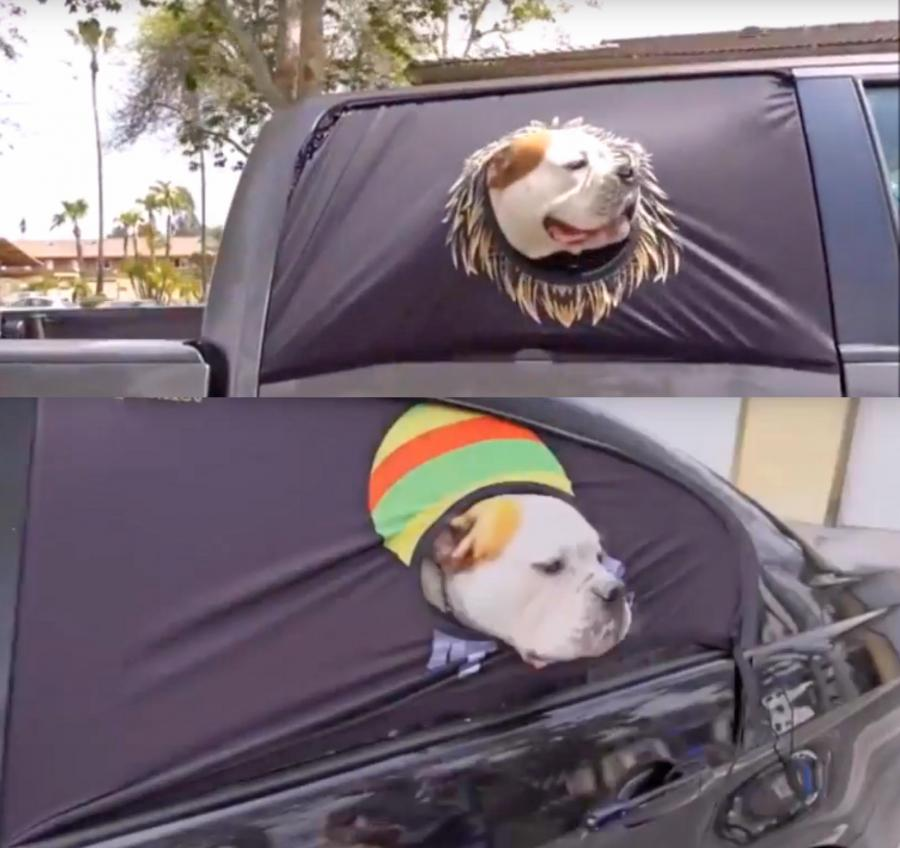Peekapet A Safe Way For Your Dog To Hang Out The Car Window