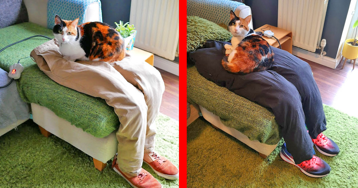 People Are Now Creating Fake Human Laps For Their Needy Cats To Sit On