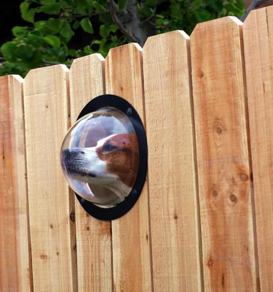 Pet Peek Fence Window For Dogs