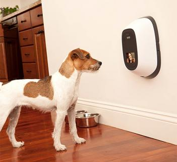 PetChatz Pet Camera and Treat Dispenser