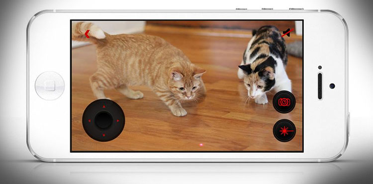 PetCube Play With Your Pet From Your Phone