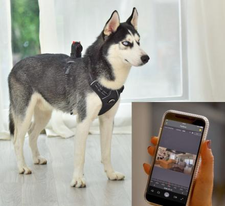 PetNow Smart Pet Camera Gives a Live View Of Your Dog On Smartphone