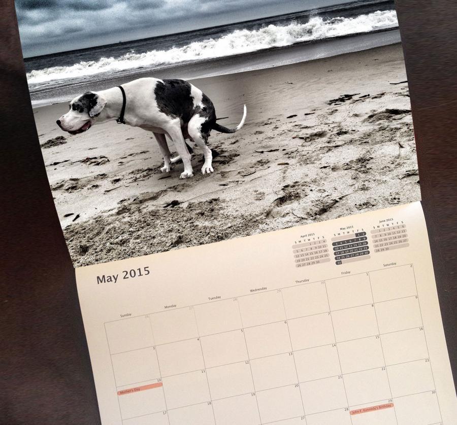 Calendar Dogs : Pooping dogs calendar