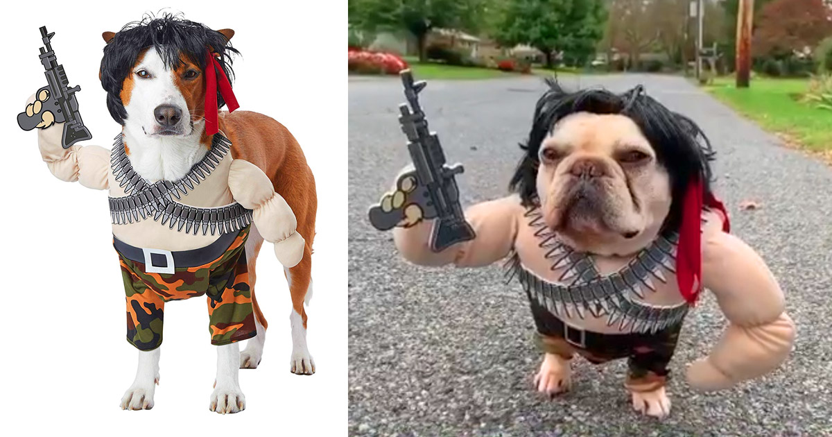 Rambo Dog Costume