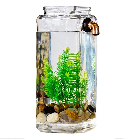Self cleaning fish aquarium for Easy aquarium fish
