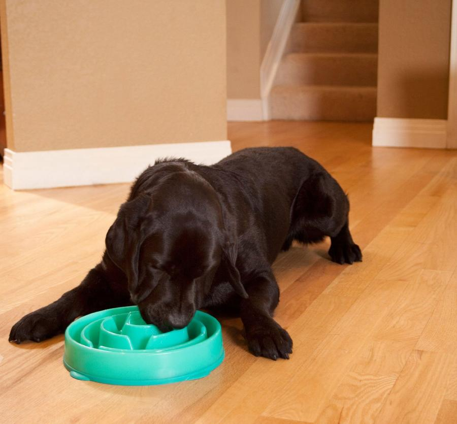 Slo-Bowl Dog Bowl For Slow Feeding