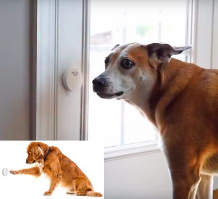 Smart Dog Door Bell Lets You Know When Your Dog Needs To Go Outside