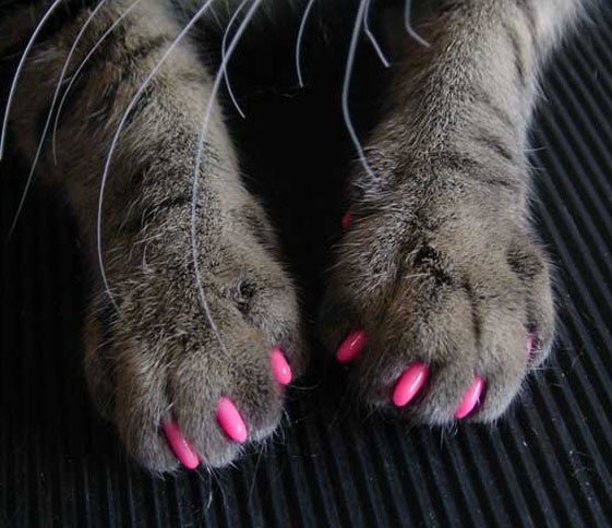 Softclaws Cat Claw Attachments