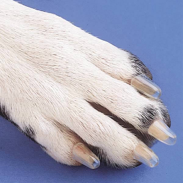 SoftClaws Cat Claw Attachemts