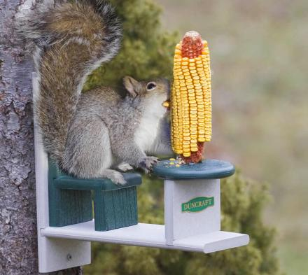 Squirrel Table and Chair Lets Your Squirrels Eat With Class