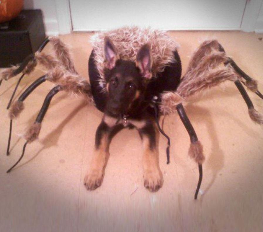 Tarantula Spider Dog Costume Enlarge Image & Tarantula Spider Dog Costume