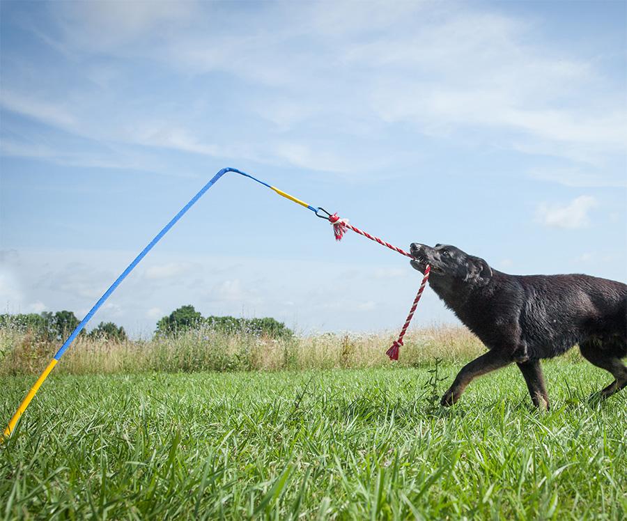 Dog Tug Pole Toy