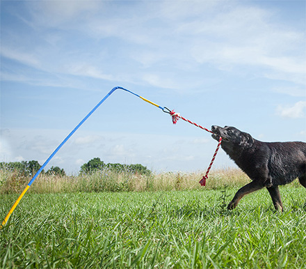 อุปกรณ์ออกกำลังกายสุนัข