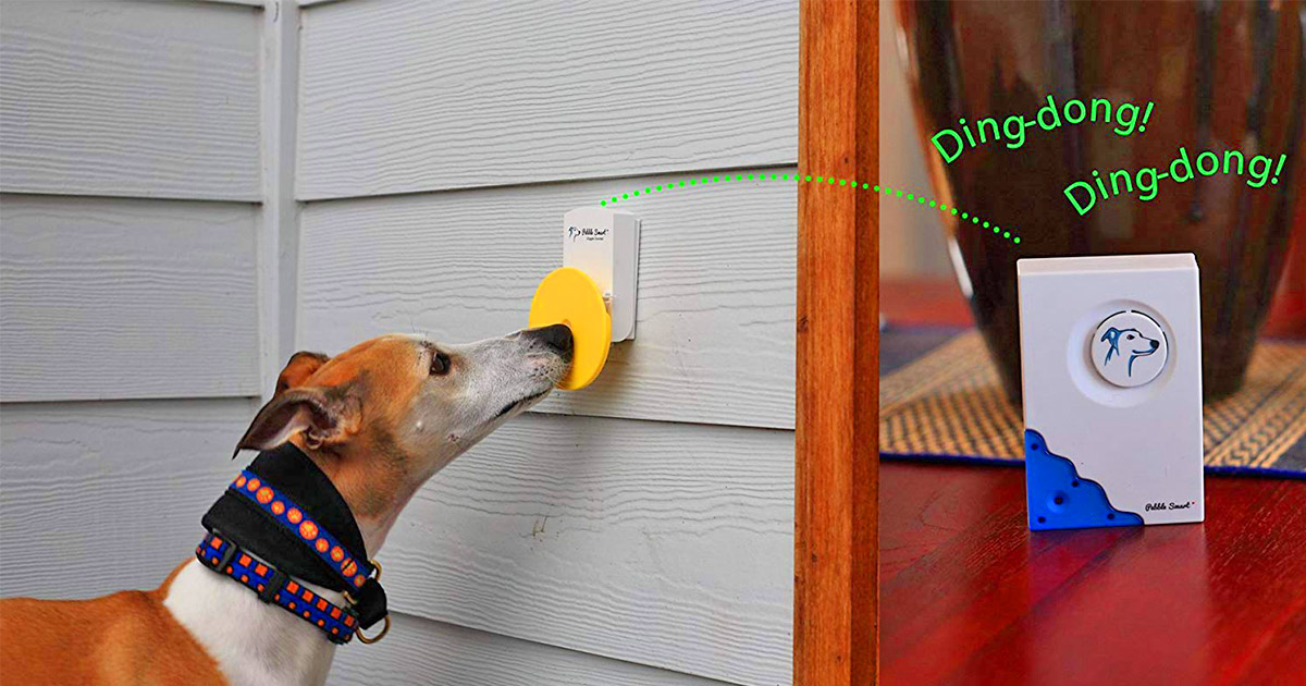 The Pebble Smart Doggie Doorbell Lets You Know When Your Dog Is Ready To Come Inside
