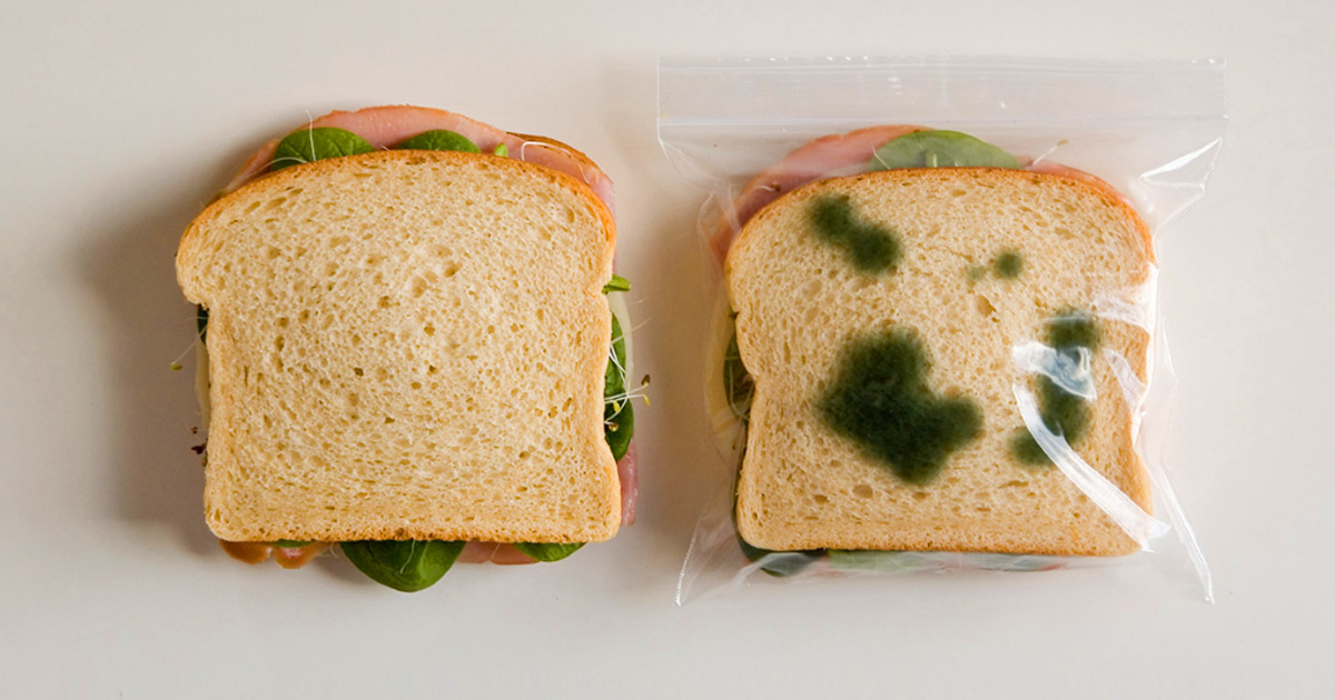 These Anti-Theft Lunch Bags Makes It Look Like Your Sandwich Is Moldy