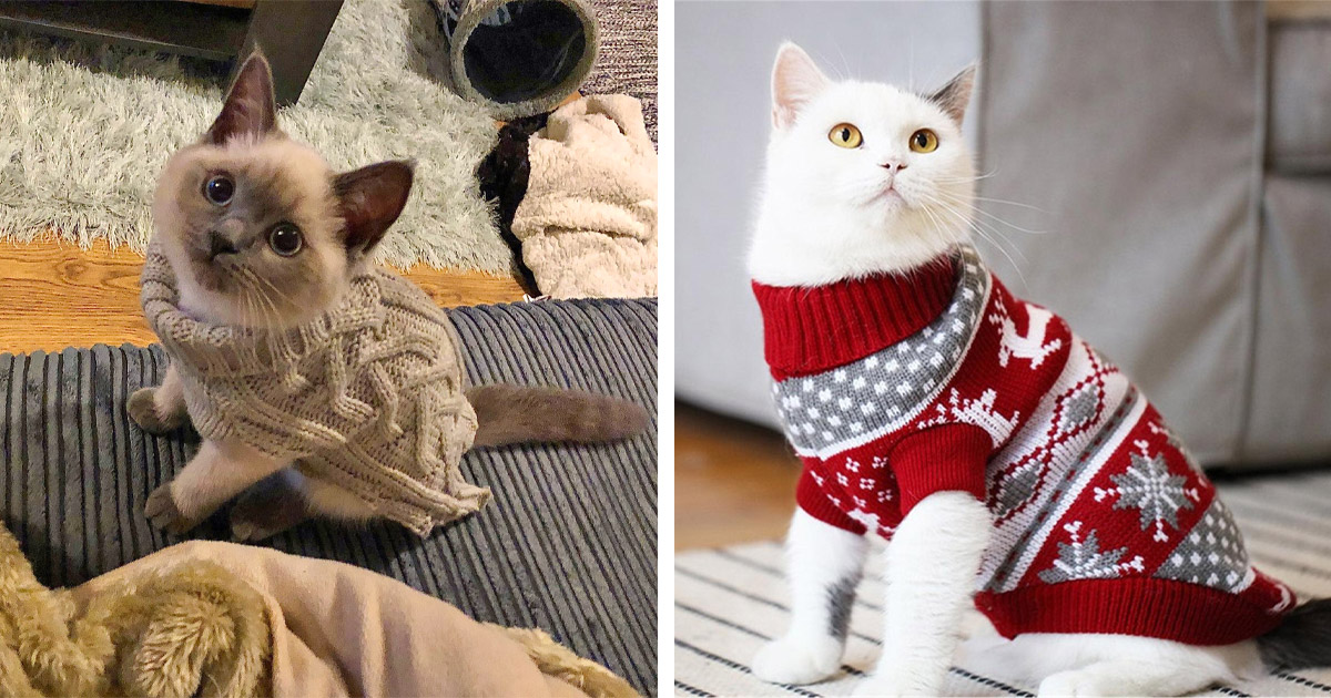 These Cat Cardigan Sweaters Are An Adorable Way To Keep You Kitty Cozy This Winter