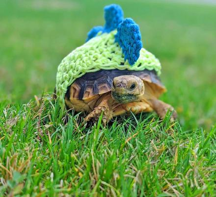 These Crochet Turtle Sweaters Are The Cutest Way To Keep Your Turtles Cozy