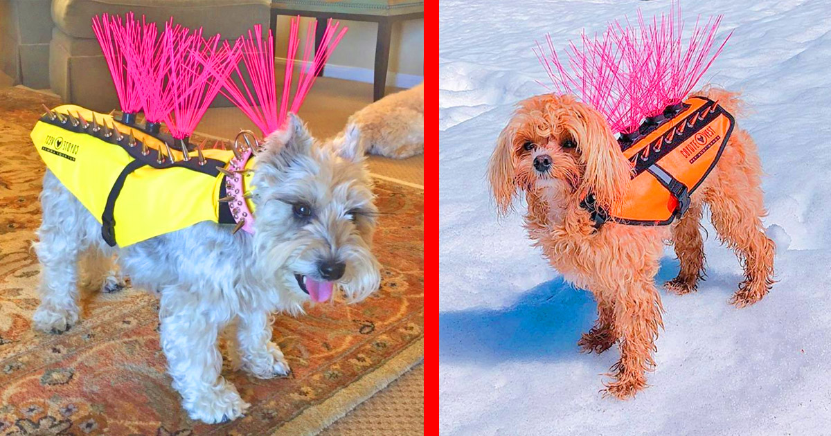 These Ingenious Spiked Dog Harnesses Protect Your Pooches Against Coyotes and Birds of Prey