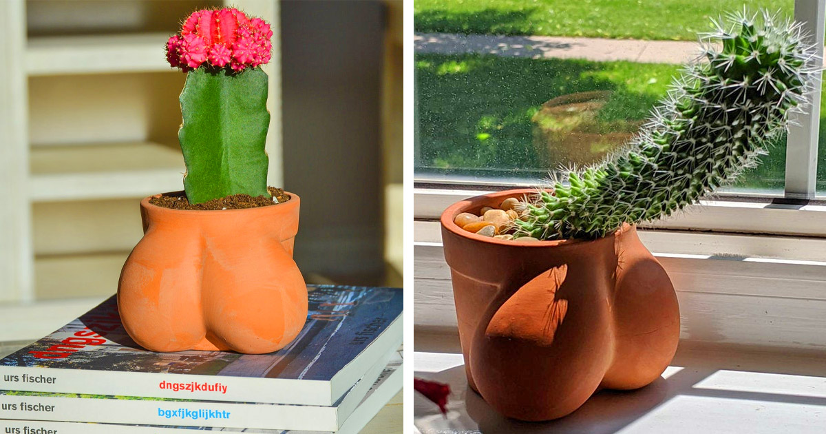 This Balls Shaped Planter Lets You Grow The Perfect Sized Cactus You