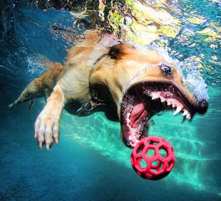 This Book Features Just Pictures Of Dogs Underwater